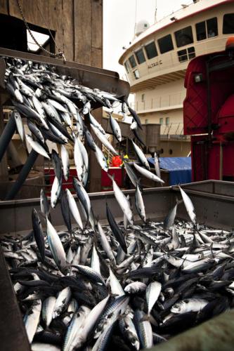 Fiskekvoter